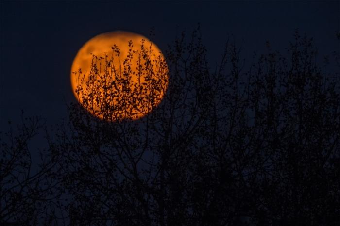 idée photo halloween pour fond écran ordinateur, photo de pleine lune avec branches noires et ciel nocturne