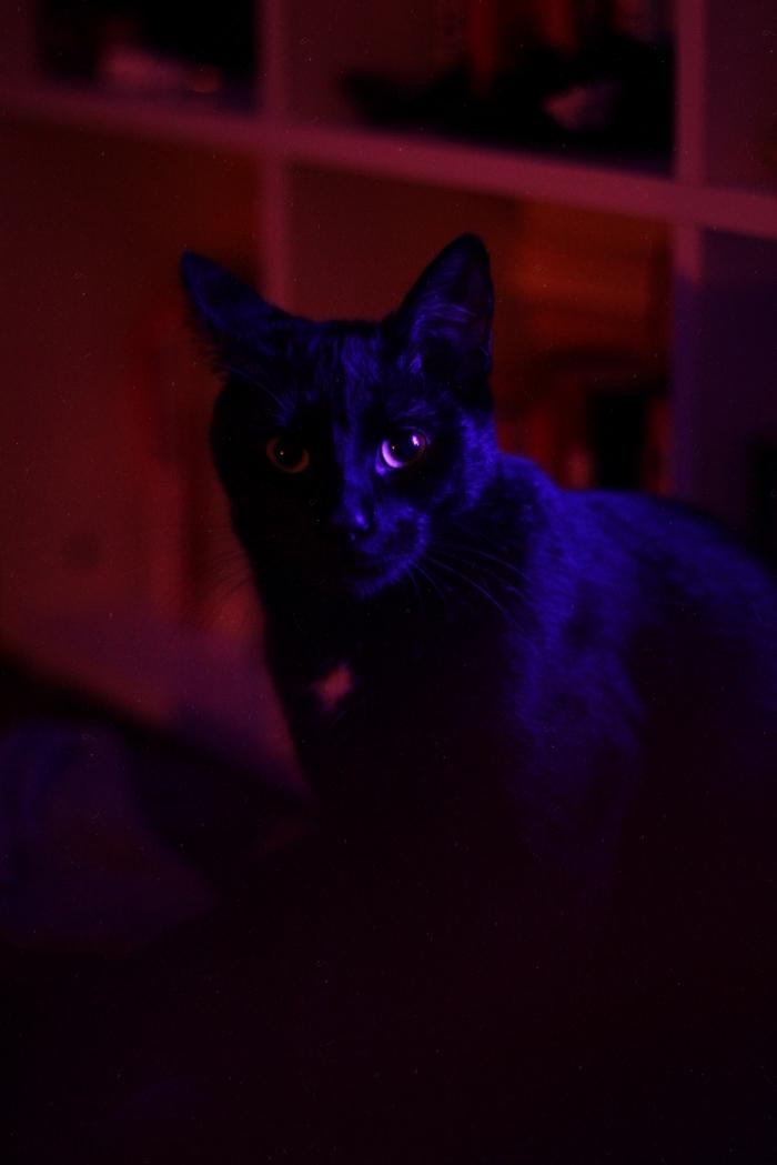 chat noir symbole de halloween, idée fond d écran horreur pour Iphone, photo chat effrayant porteur de malchance