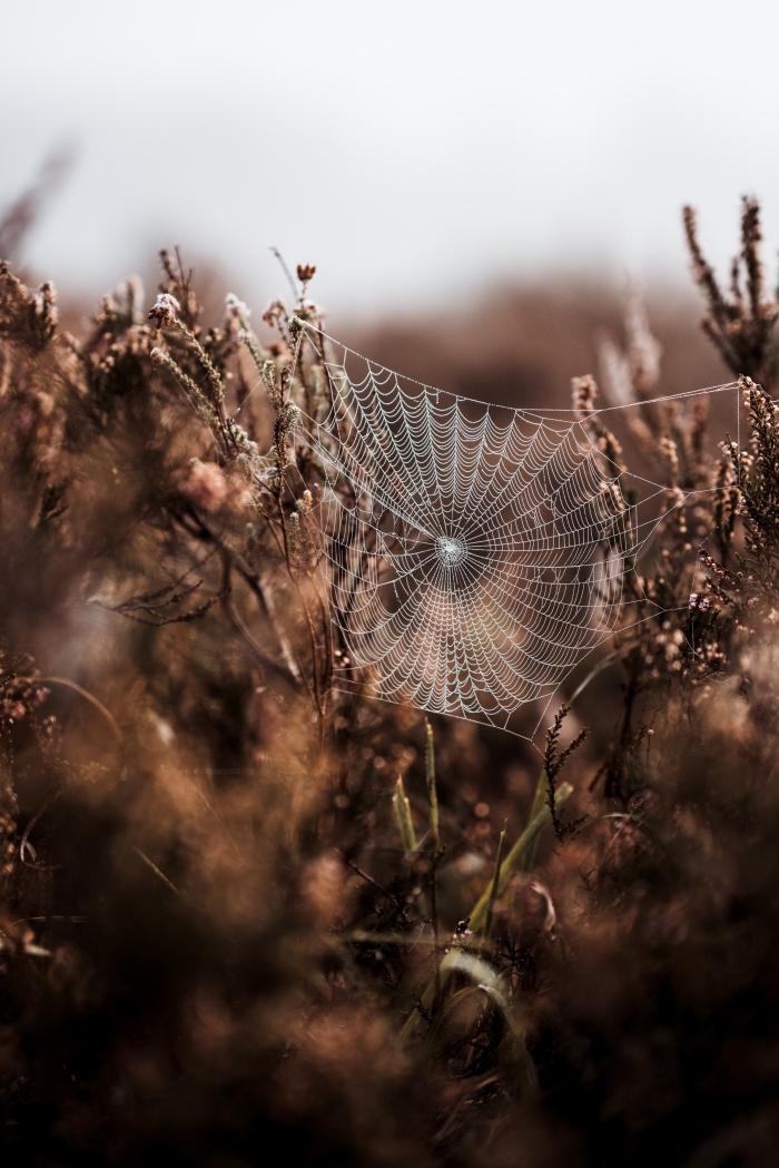 idée paysage d automne pour écran verrouillage portable, photo de toile d'araignée et plantes séchées automne