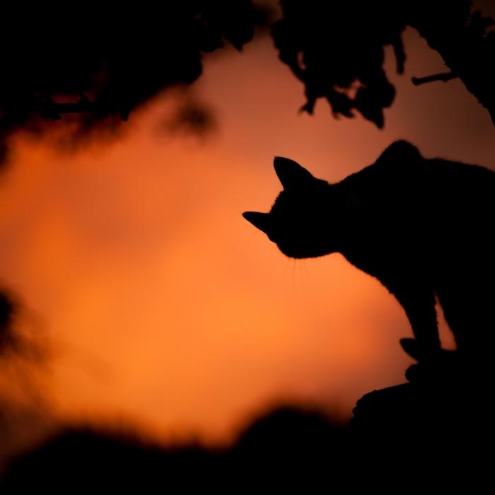idée fond d'écran horreur avec chat noir, quelle photo pour écran halloween, photo de coucher de soleil avec chat noir