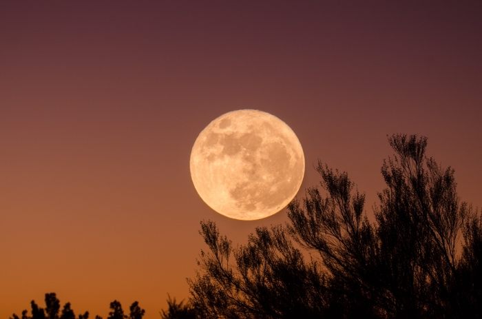 paysage naturel du ciel avec pleine lune et arbres, idée image halloween paysage pour fond écran d'ordinateur