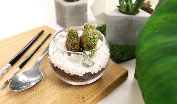 exemple de terrarium plante facile à faire soi-même, idée contenant terrarium en verre et forme ronde de type ouvert