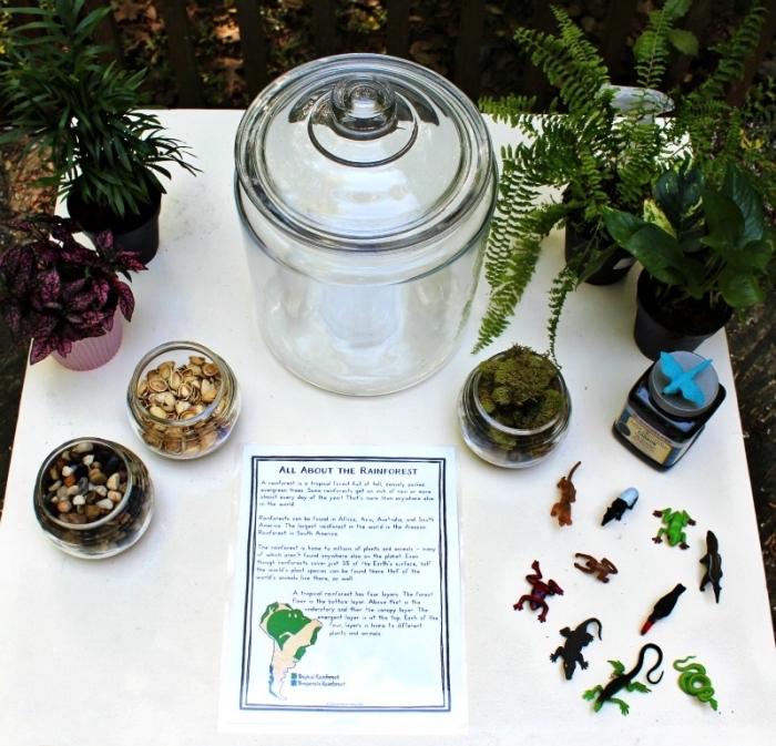 fabriquer un terrarium dans un bocal avec couvercle, idée terrarium fermé facile à faire soi-même, plantes pour terrarium fermé