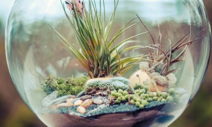 terrarium bocal à faire soi-même, bricolage facile avec mini plantes, diy mini jardin dans un récipient en verre