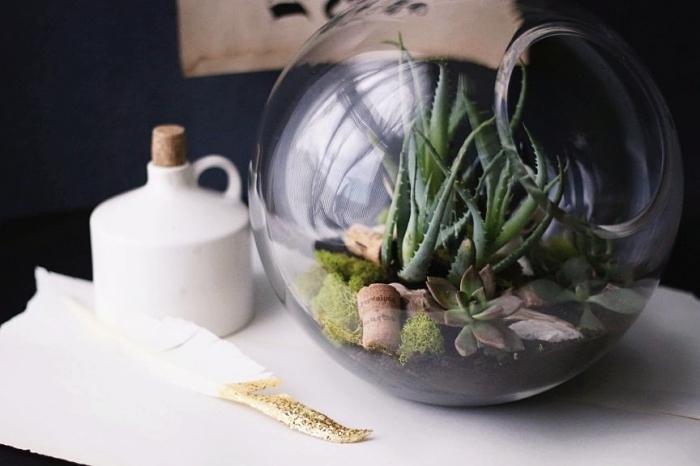 modèle de plante en bocal sur couche de terreau et mousse, faire un mini jardin dans contenant en verre avec mini plantes