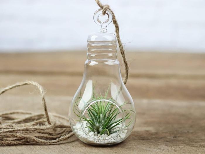bricolage terrarium verre dans un récipient verre en forme d'ampoule avec trou de suspension, mini jardin plante aérienne