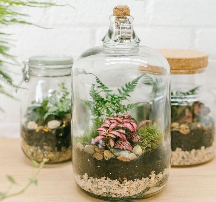 quelles types de plante sous verre utiliser pour faire un terrarium, modèle de terrarium bocal diy avec galets