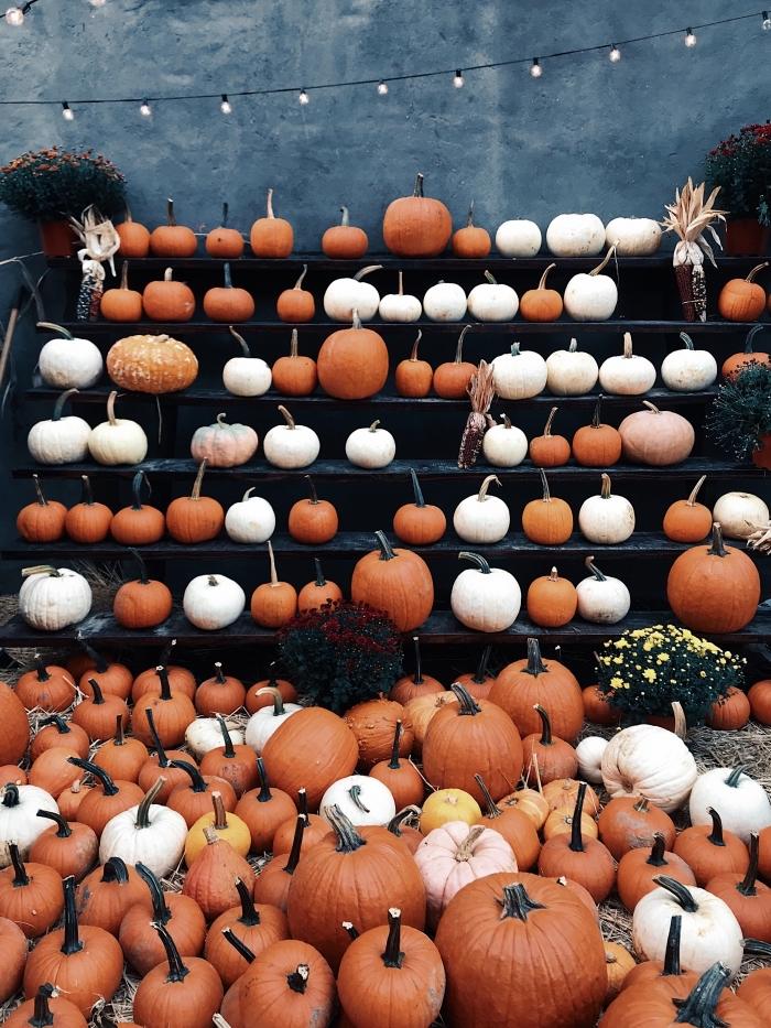 décoration DIY pour la fête de Halloween avec citrouilles orange et blanches, idée photo halloween pour portable