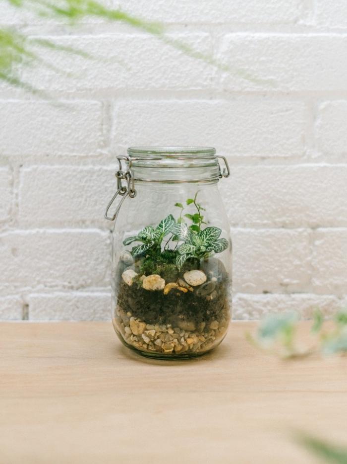 modèle de terrarium plante bocal, quelle plante en bocal fermé, mini jardin avec terreau ordinateur et mini plantes