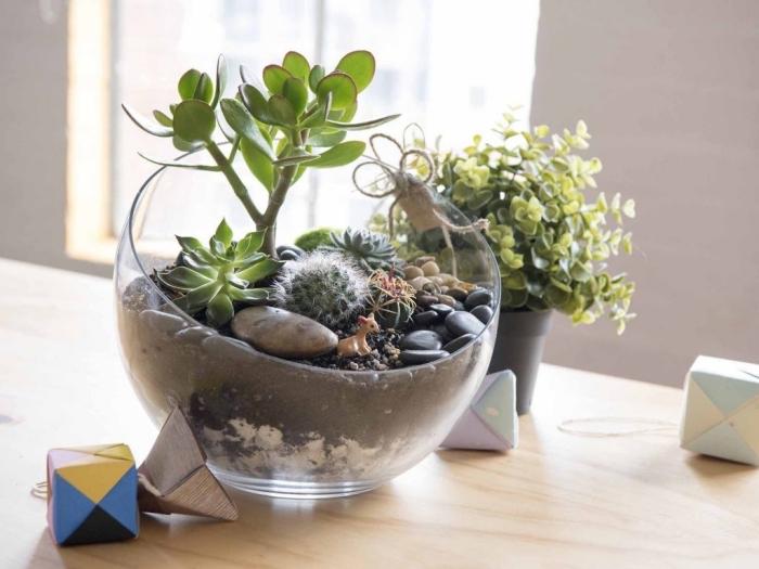 idée terrarium cactus dans un aquarium, modèle de mini jardin à réaliser avec petites plantes et cailloux dans contenant verre