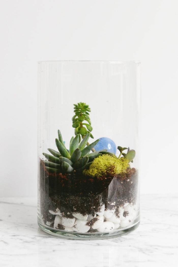 idée plante terrarium ouvert, modèle de mini jardin dans contenant en verre rempli de cailloux blancs et mini plantes