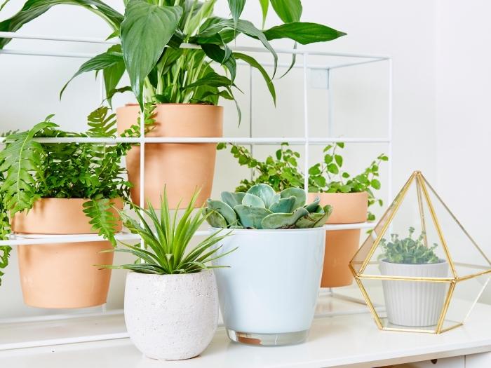décoration avec plantes vertes, modèle de terrarium facile à réaliser avec un récipient forme géométrique en verre