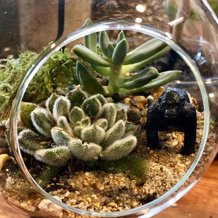 comment faire un terrarium original, modèle mini jardin avec plantes et cailloux, idée jardin dans bocal verre diy