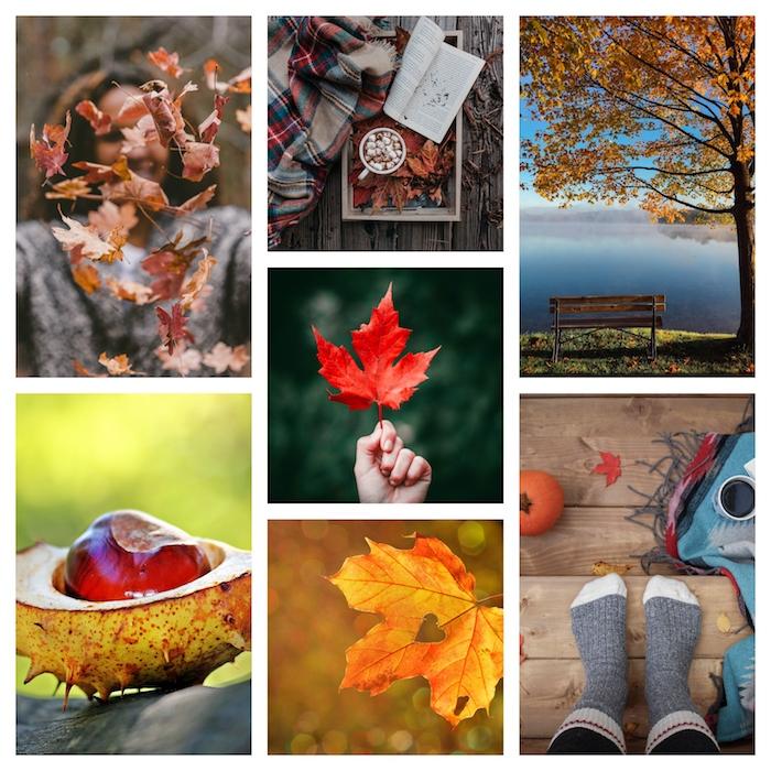 Images à transformer en dessins automne, dessin feuille d'arbre, dessin automne saison de l'année