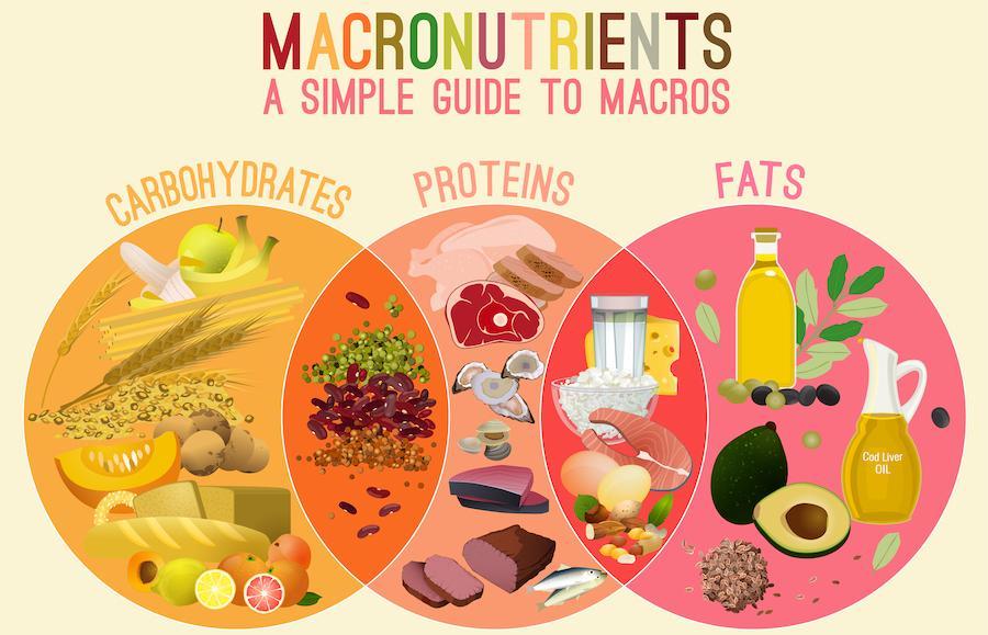 repas du soir équilibré, la bonne proportion de macronutriments dans une assiette, combinaison de glucides, graisses et protéines
