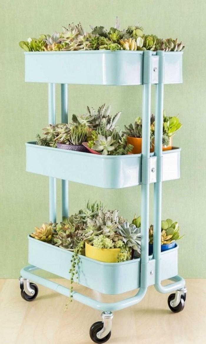 rangement pots de succulents sur les rayons d une etagere de couleur bleue, bidouille ikea range pot de fleurs