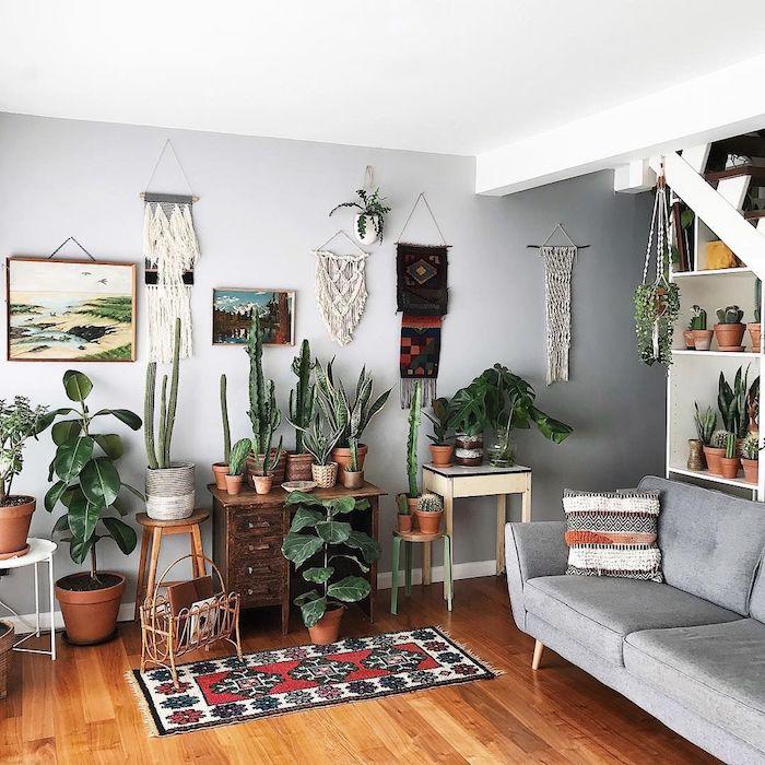 peinture grise, nuance gris perle pour repeindre les murs d un salon à déco jungle, plantes vertes d interieur