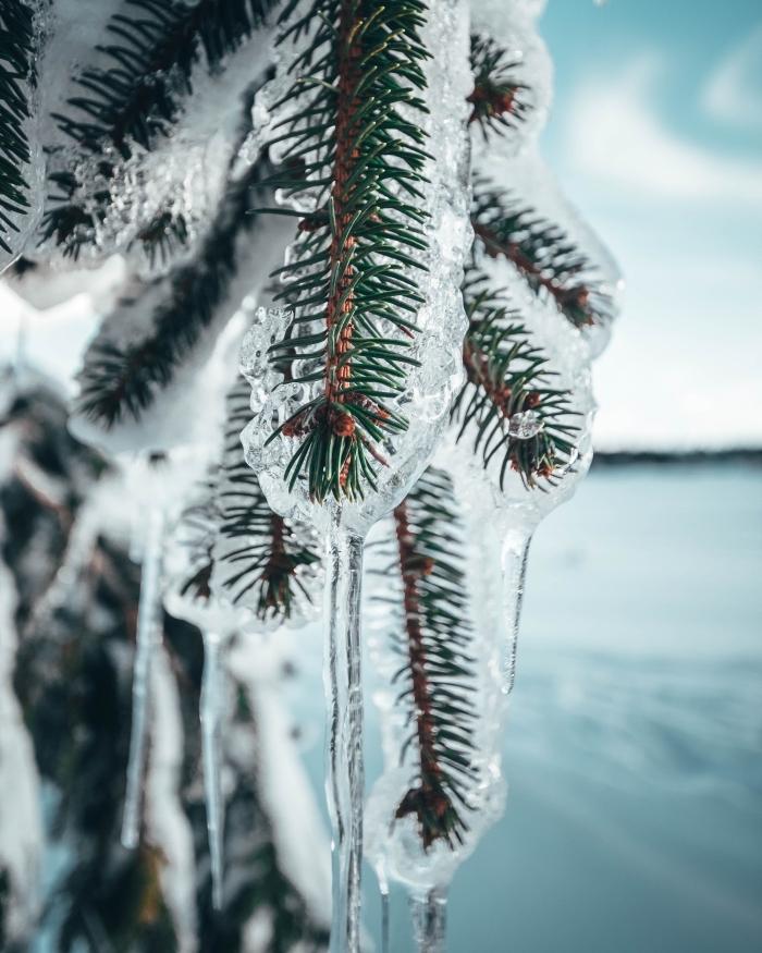 image joyeux noel pour wallpaper téléphone, photographie macro de branches de sapin glacées et ciel bleu à nuages blanches