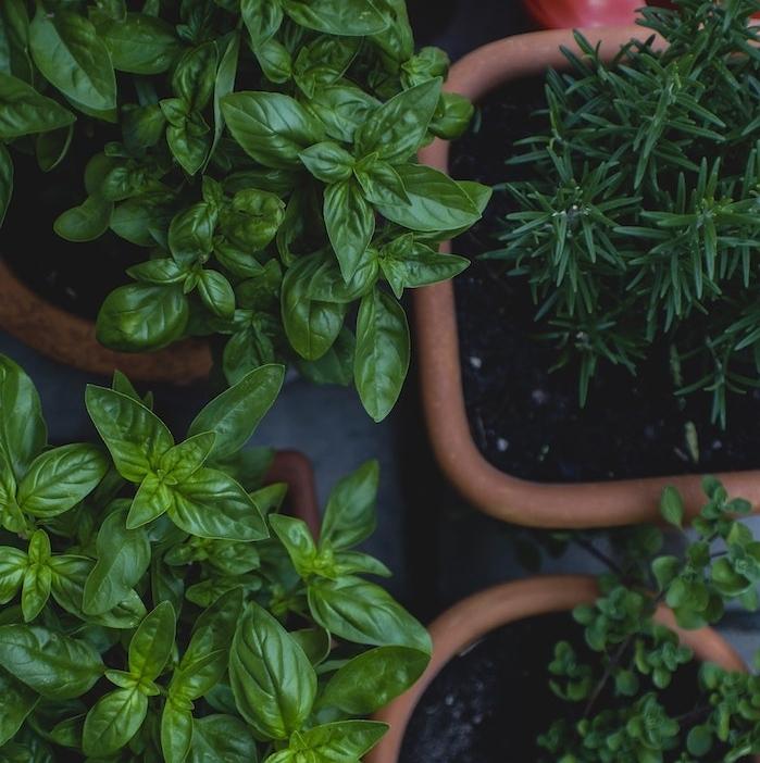 les astuces pour faire cultiver des plantes aromatiques en pot, plante interieur cuisine