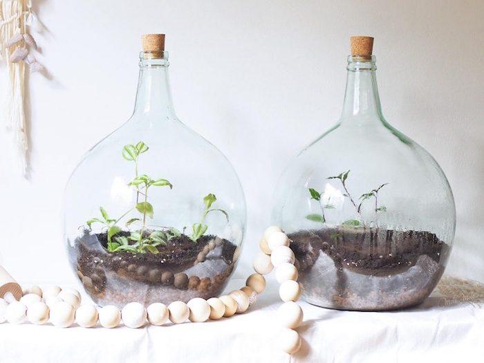 Terrarium pour plantes vertes dans grand vase deco a poser au sol, inspiration déco salon avec dame-jeanne