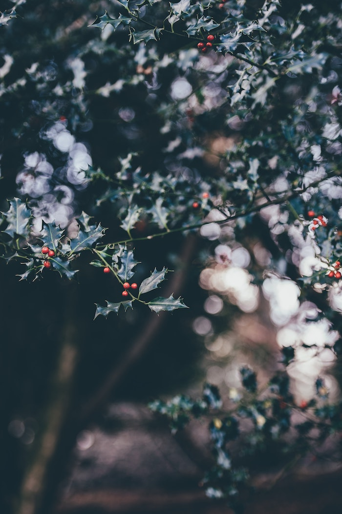 Extérieur hiver, arbre joyeux noel humour, carte de noël digitale à envoyer