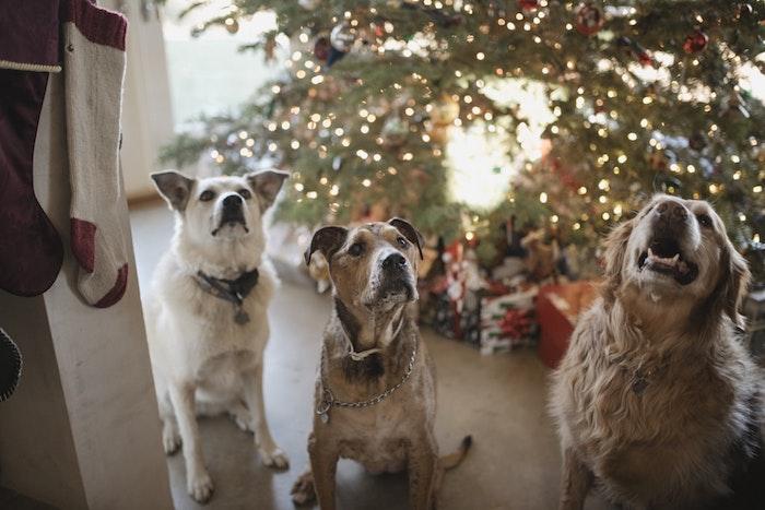 Trois chiens aupres le sapin de noel décoré joliment avec guirlande lumineuse, carte joyeux noel image, fond d écran image sapin de noel