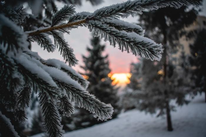 image de joyeux noel, exemple comment prendre jolis photos de la nature en hiver au coucher du soleil, photographie montagne enneigée avec sapins et soleil