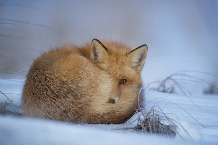 Hiver adorable image noel 2019, festive carte photo joyeux noel, renard adorable dans la neige