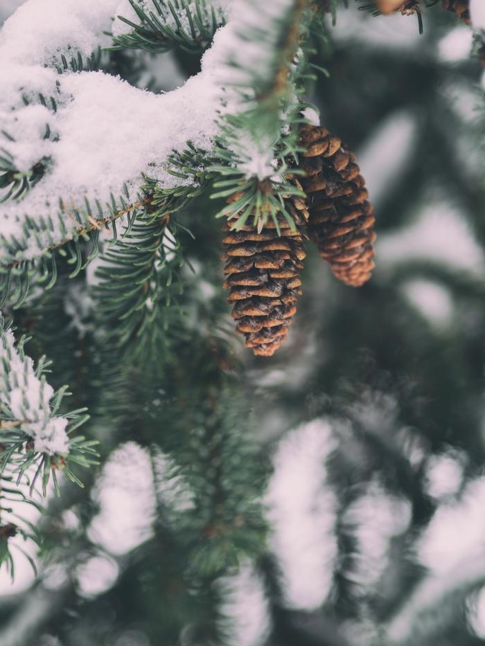 idée fond verrouillage d'écran naturel pour hiver avec une photo de pommes de pin et branches de sapin enneigé