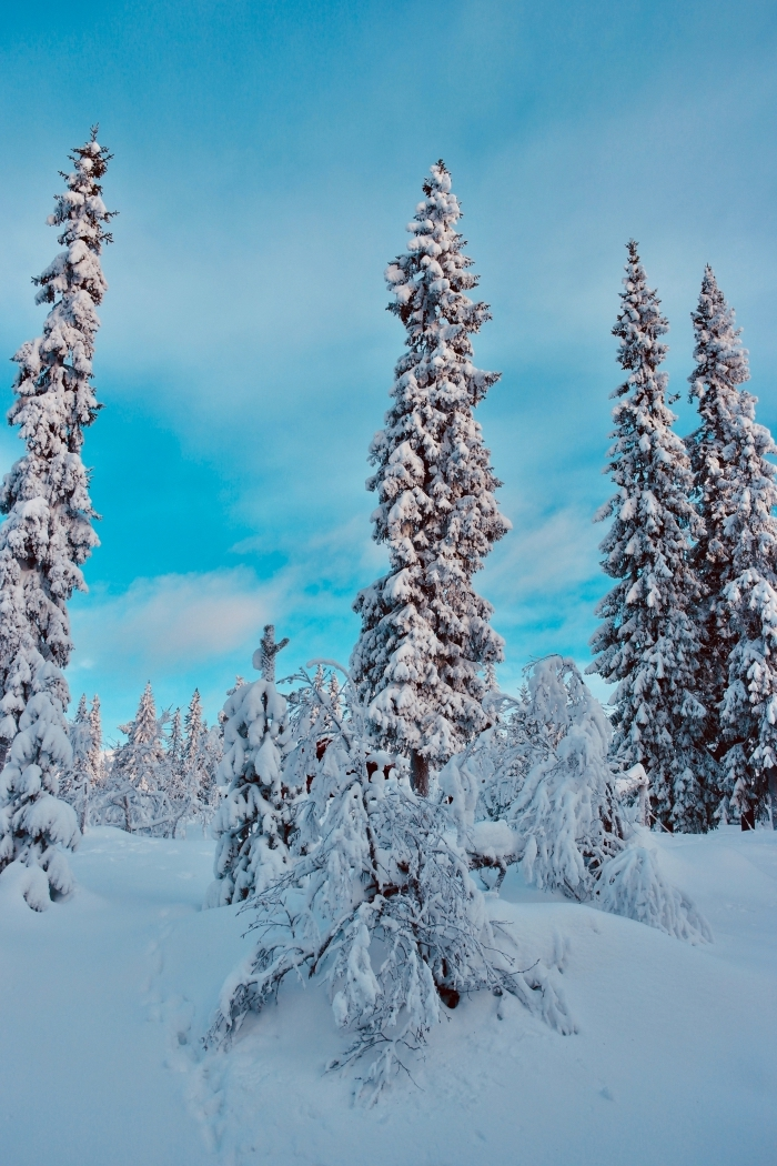 image joyeux noel 2019 pour fond d'écran iphone, photo de la nature enneigée avec gros sapins couverts de neige