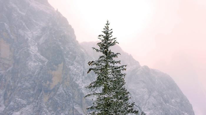 image joyeuses fêtes gratuite pour fond d'écran PC, paysage hiver avec un gros sapin naturel enneigé au lever du soleil