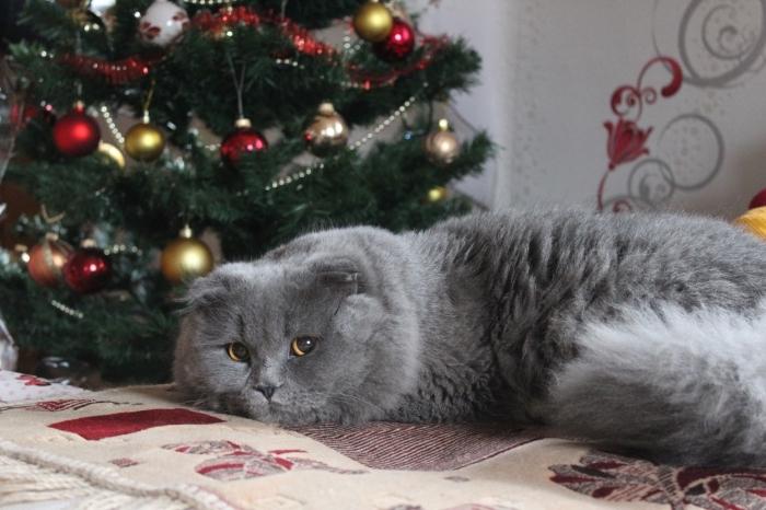 wallpaper ambiance cocooning pour Noël avec chat gris devant un sapin décoré classique en ornements rouge et or