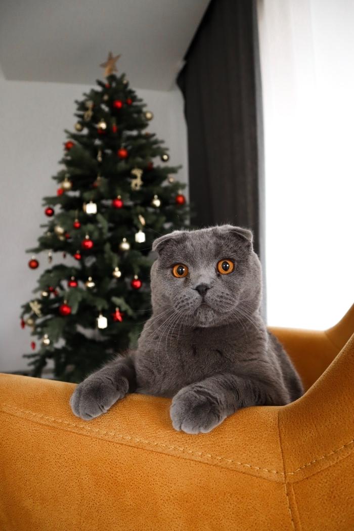 belle image de noel, fond d'écran noel amusant pour smartphone avec un chat gris devant un sapin de Noël décoré