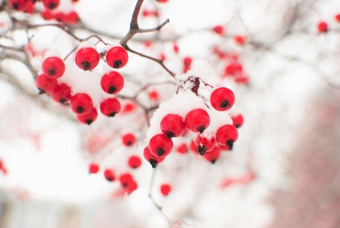 Joyeux noel image desktop enneigé, carte de noël digitale à envoyer branche rouge fruits