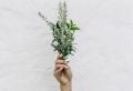 Faire pousser des plantes aromatiques dans sa cuisine – comment s'y prendre ?