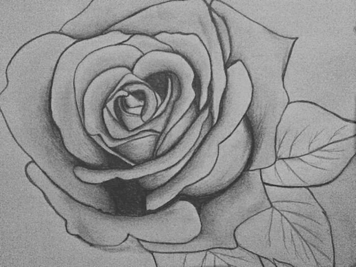 modèle de rose facile à dessiner au crayon, dessin blanc et noir d'une jolie rose avec feuilles, loisir créatif pour grands et petits