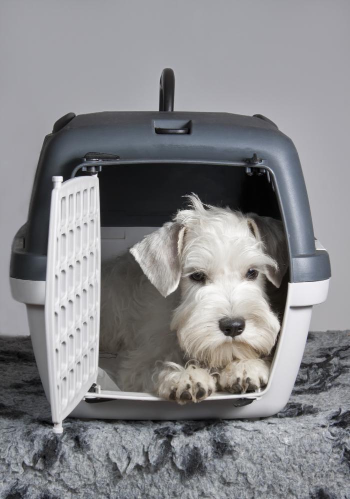 organiser un voyage sécurisé avec son chien, transporter son animal de compagnie dans une cage de transport pour chien