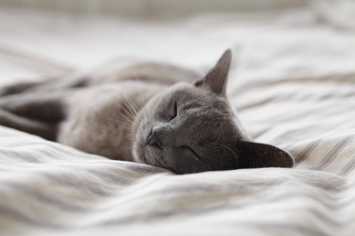 Chat endormi sur matelas confort, idée choix literie, mythes sur le matelas démystifiés