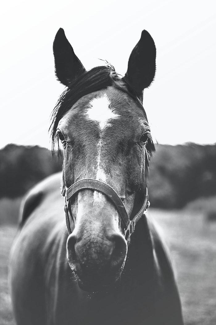 Cheval photogénique peinture monochrome, heureux de voir son fond d écran cool noir et blanc