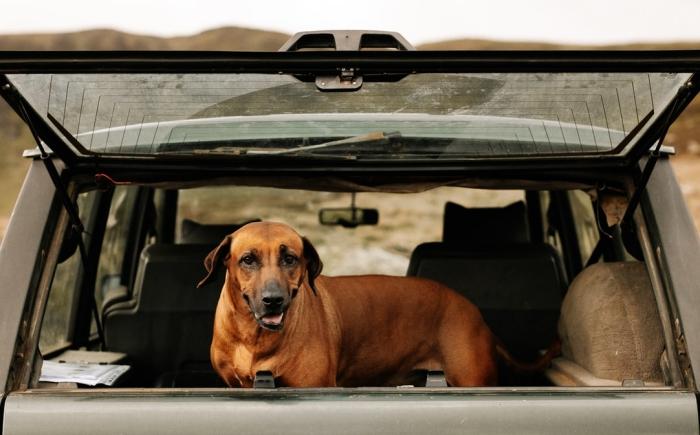 comment protéger son chien lors d'un voyage en voiture long, quelles précautions pour voyager avec son animal
