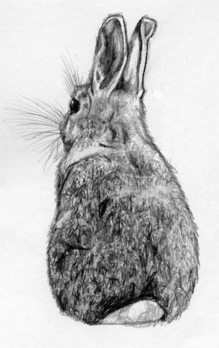 apprendre à dessiner un lièvre au crayon, idée de dessin animalier au crayon sur une feuille de papier blanc