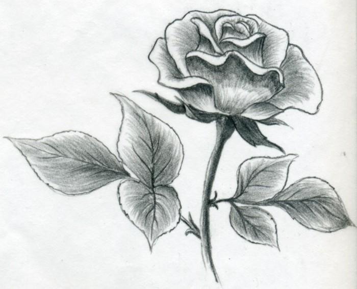 exemple de dessin débutant facile à design floral, modèle de dessin au crayon noir sur papier blanc à motifs rose