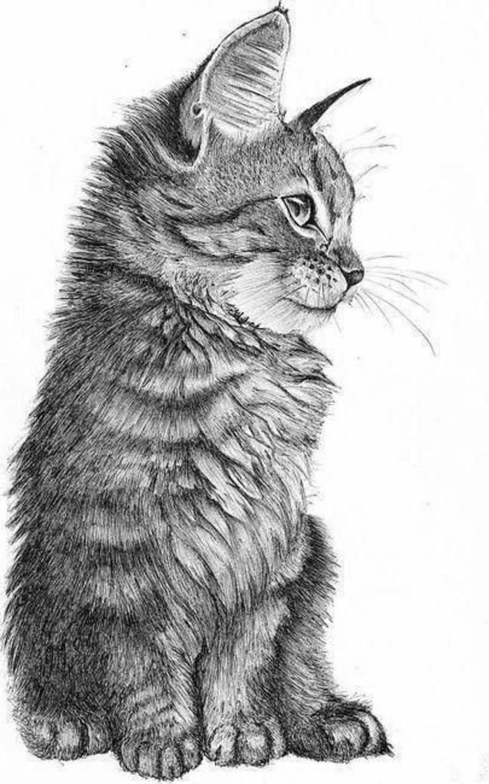 comment dessiner un petit chat au crayon sur papier blanc, modèle de dessin à reproduire avec technique ombrage