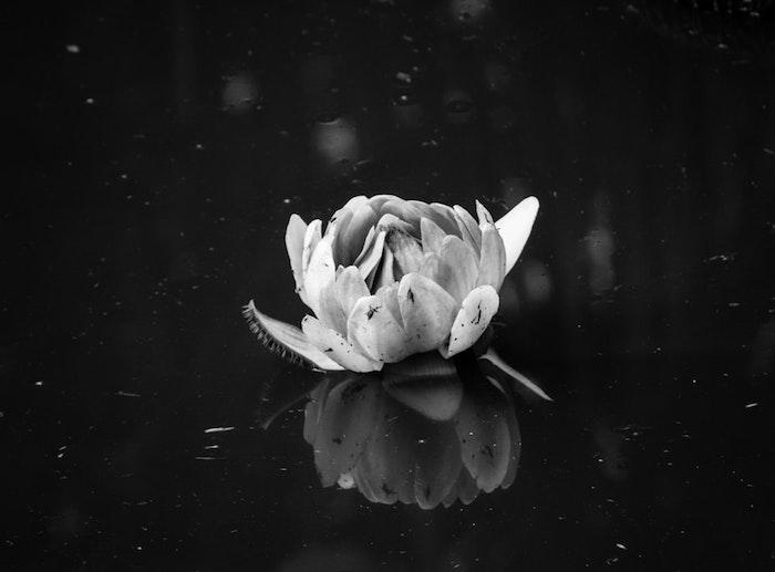Fleure de lys fond ecran tumblr, image de style à copier pour son fond ecran noir et blanc