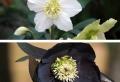 Cadeau de Noël : la fleur, reine aussi en hiver