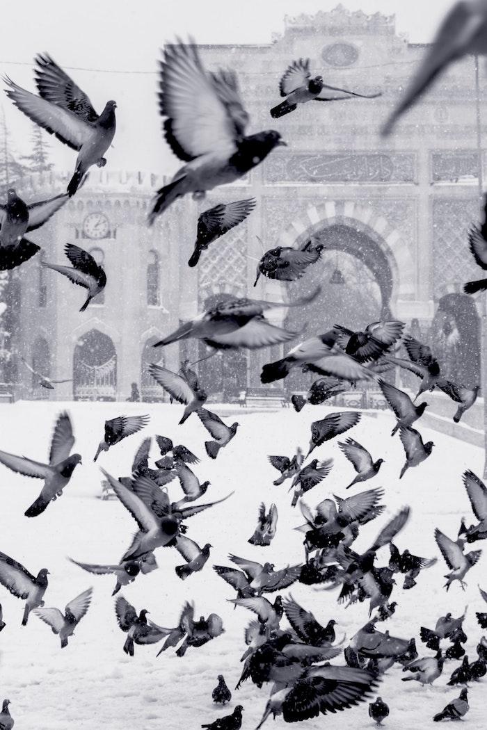 Oiseaux en vol dans la neige, cool image noir et blanc, photo gratuite à utiliser comme fond d'écan