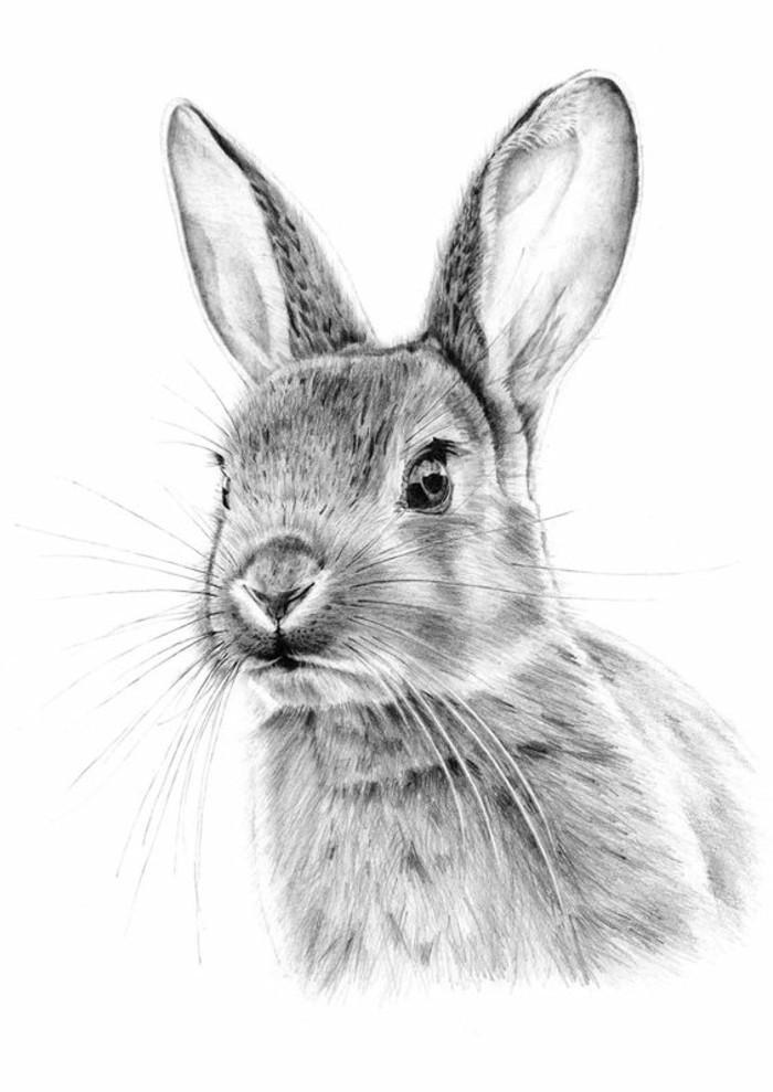 dessin d'animaux en blanc et noir pour débutant, comment dessiner un lièvre au crayon noir ou gris sur papier blanc