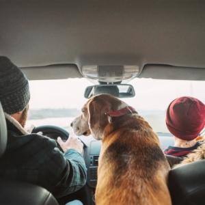 Bien préparer son voyage avec son chien