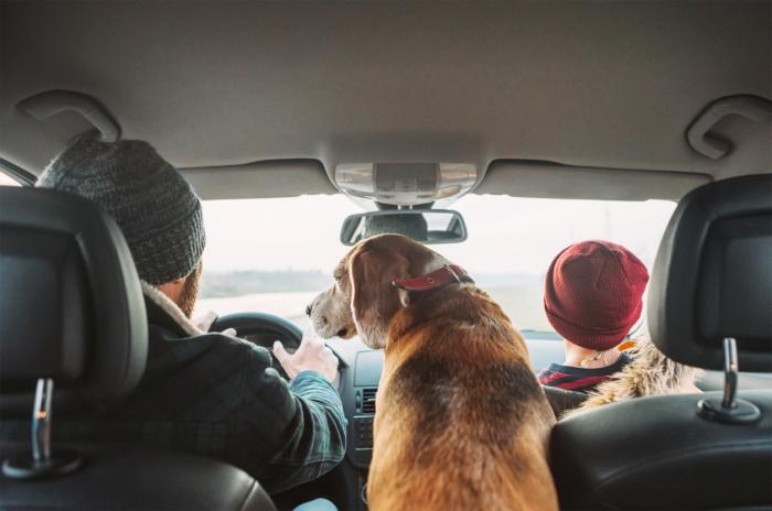 comment organiser un voyage en voiture avec son chien, quelles précautions pout voyager avec son animal de compagnie