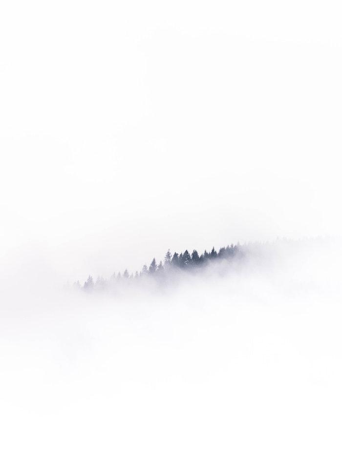 Foret dans le brouillard fond ecran blanc avec silhouettes des arbres noirs, portrait noir et blanc femme image originale